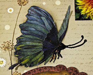 Butterfly Detailweb